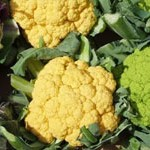 Coloured Cauliflowers