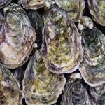 Irish #1 Oysters