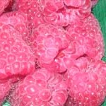 Tullameen Raspberry